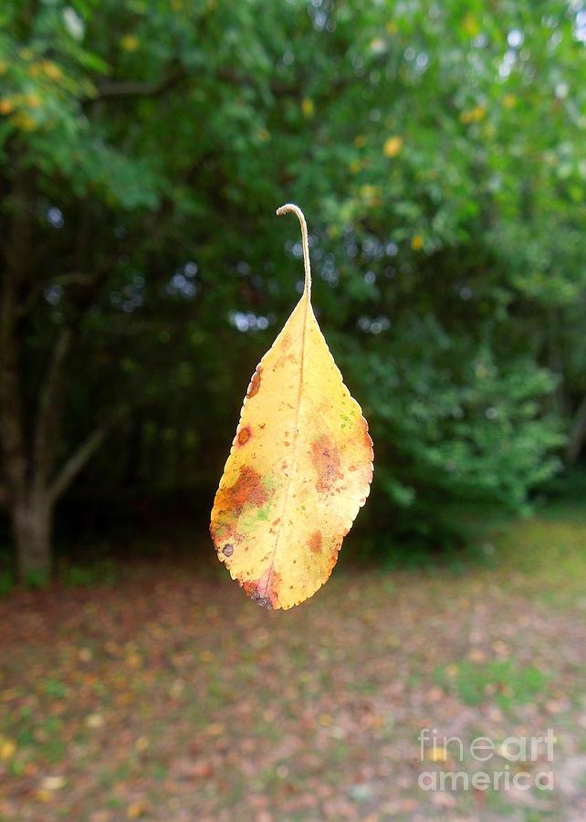 Leaf Photograph - Levitation by Renee Trenholm