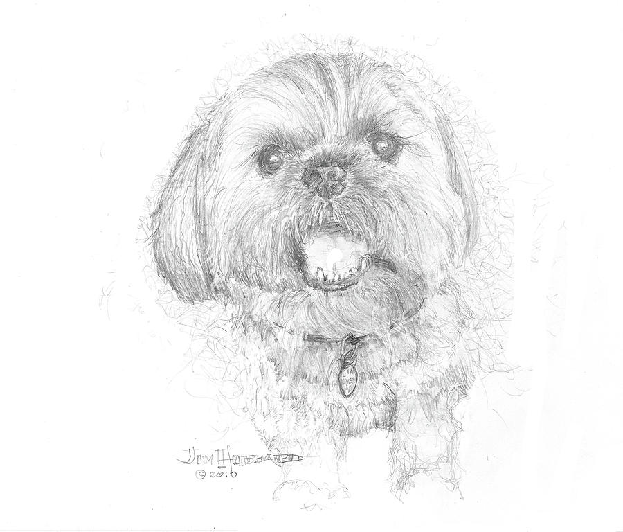 Lhasa Apso Drawing - Lhasa Apso by Jim Hubbard