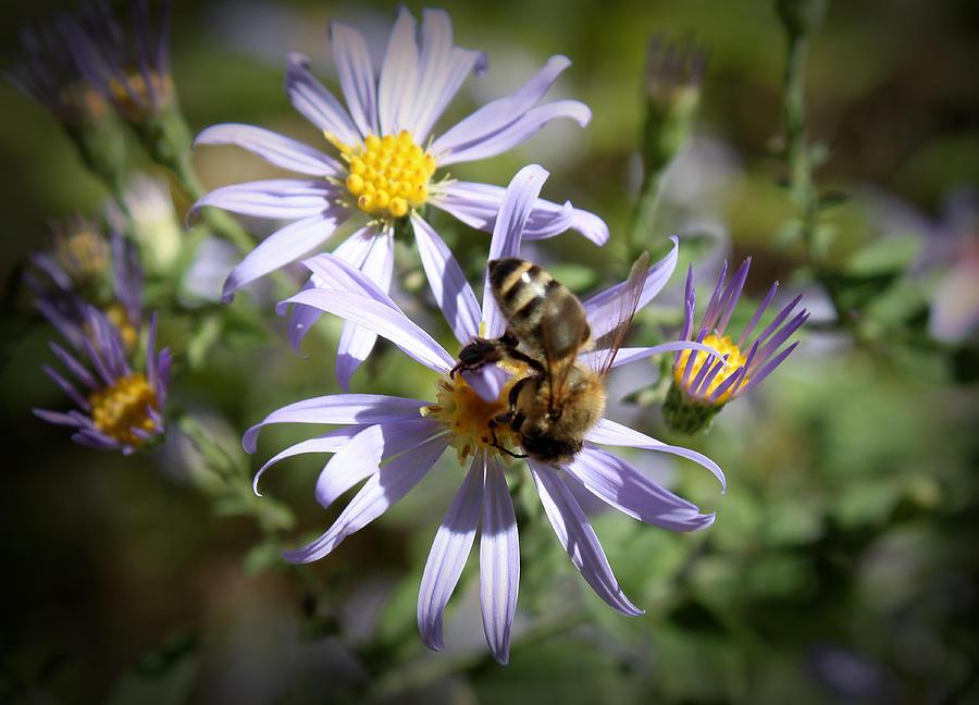 Flower Photograph - Life by Milena Ilieva
