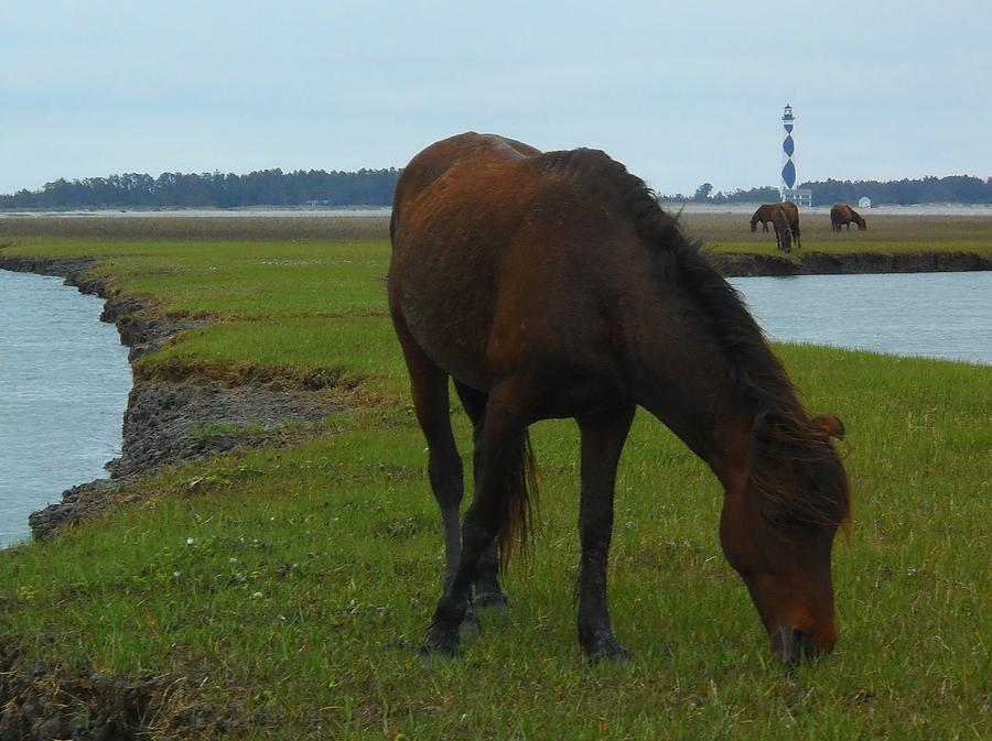Shackleford Banks Photograph - Life Without Fences by Jeff Moose