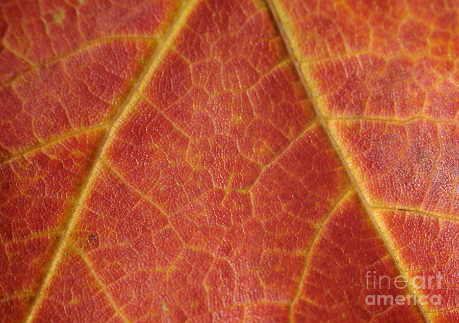 Leaf Photograph - Lifeblood by Luke Moore