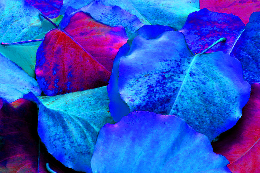 Fuchsia Photograph - Light Blue And Fuchsia Leaves by Sheila Kay McIntyre