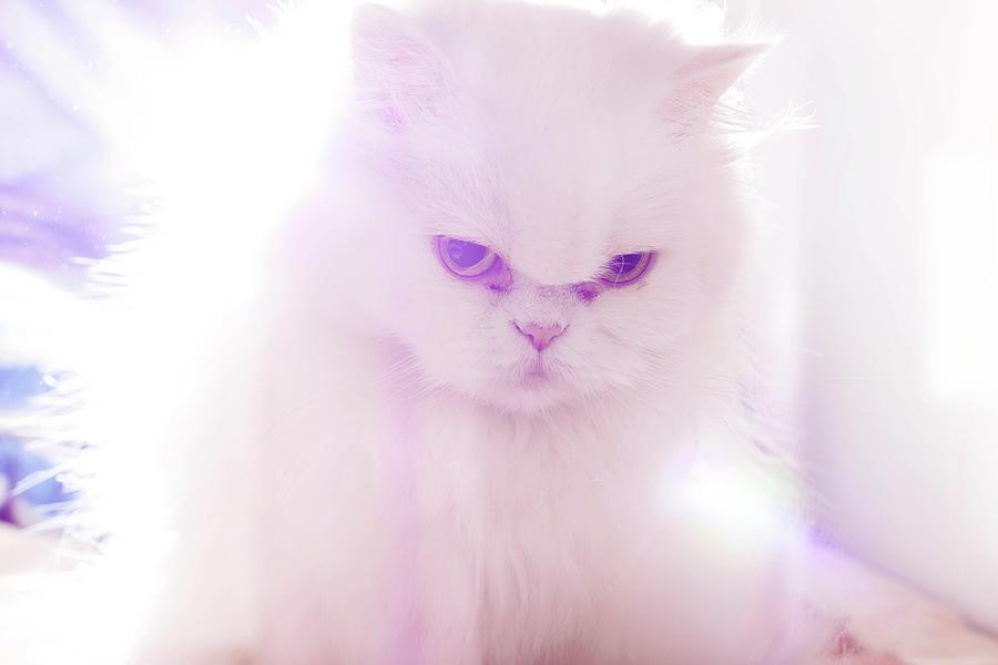 Horizontal Photograph - Light Cat by Luis Hernández Diaz