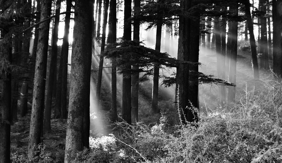 Light Photograph - Light Through The Trees by Don Schwartz
