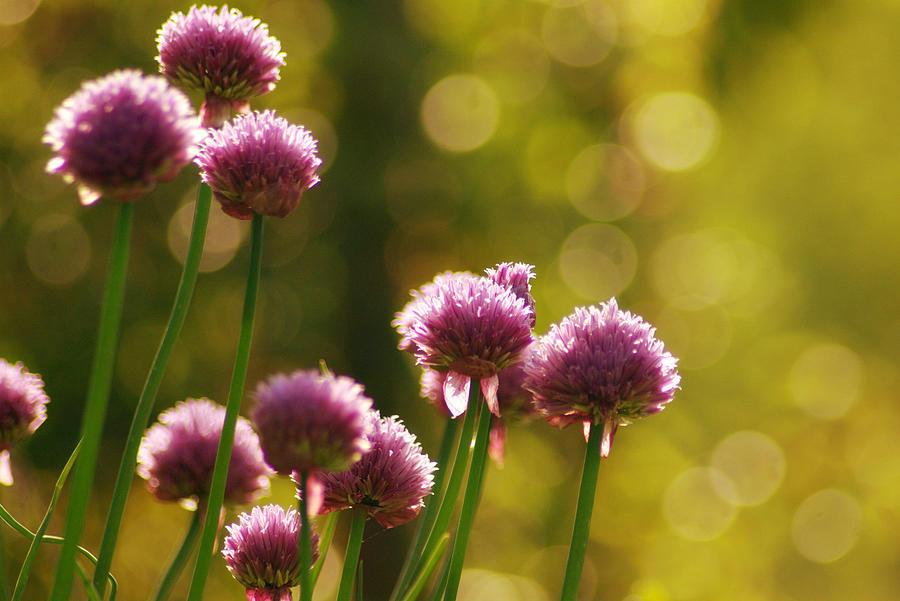 Lightbubbles Behind Flower Photograph by Bob Van Den Berg Photography