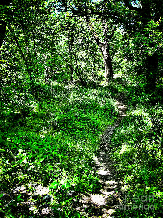 Path Photograph - Lighted Path by Colleen Kammerer
