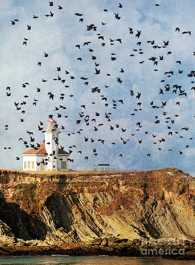 Coos Bay Photograph - Lighthouse Birds  by Billie-Jo Miller