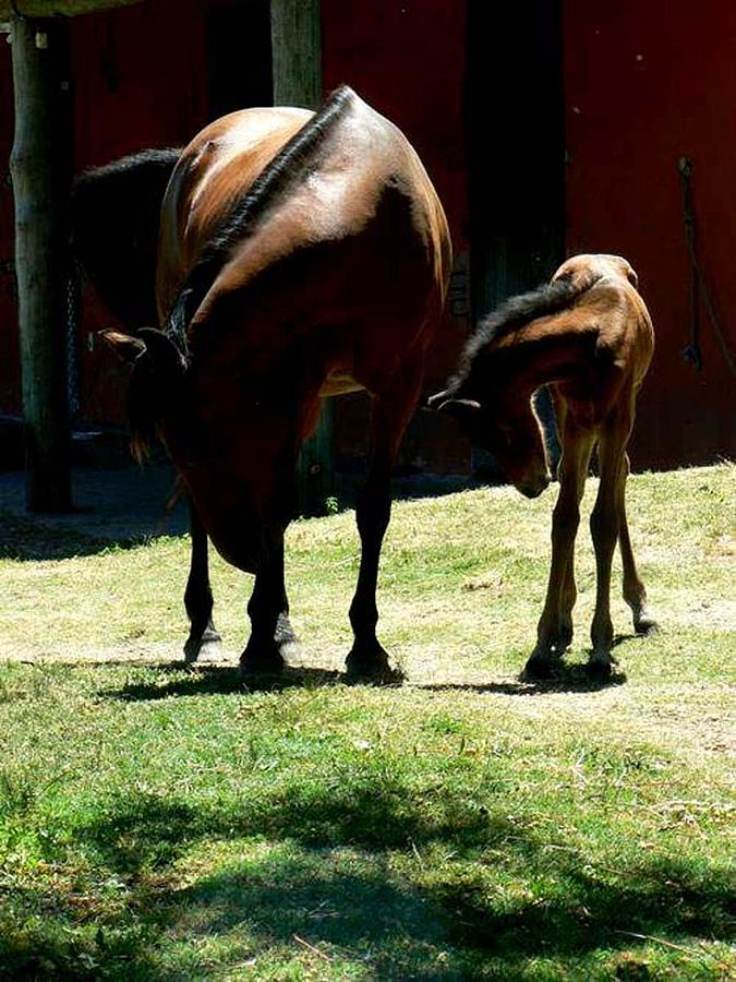 Shadow Photograph - Like Mother Like Son by De Beall