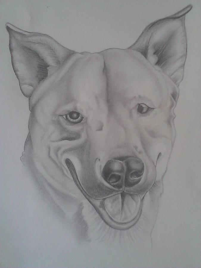 Dog Drawing - Lil Bear by Andrew Longhi
