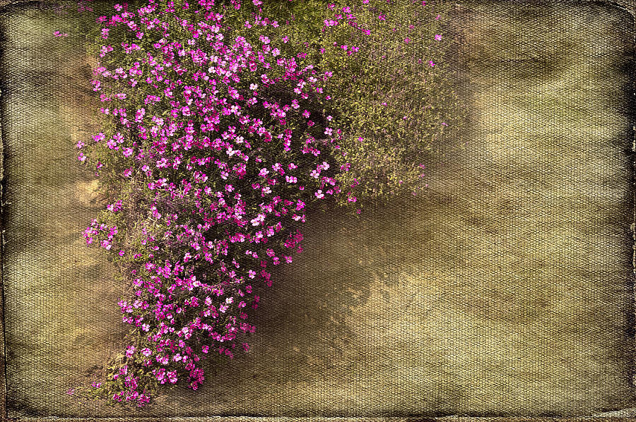 Border Photograph - Lilac Branch by Svetlana Sewell