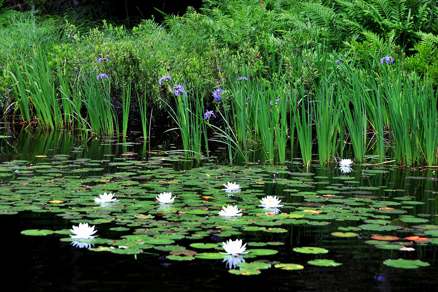 Lilies and Iris by Peter DeFina