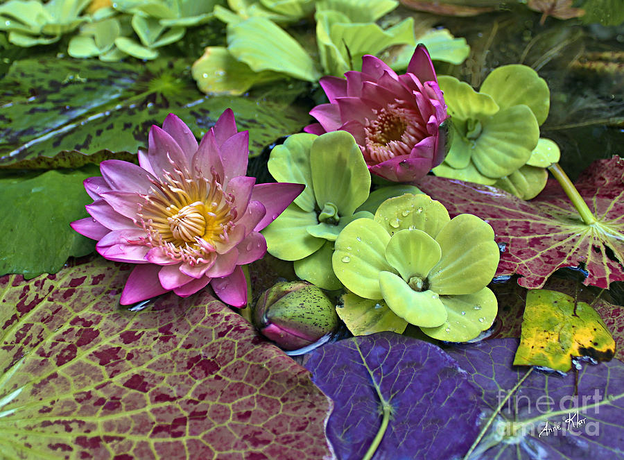 Pink Flowers Bloom Water Photograph - Lilies No. 33 by Anne Klar
