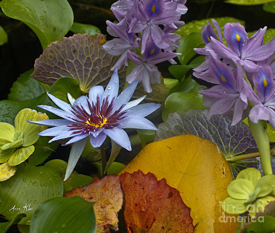 Blue Lilies Photograph - Lilies No. 37 by Anne Klar
