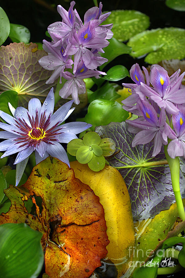 Exotic Photograph - Lillies No. 6 by Anne Klar
