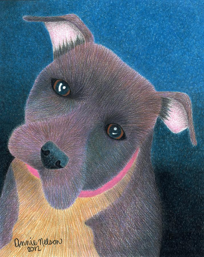 Pit Bull Drawing - Lilly by Annie Nelson