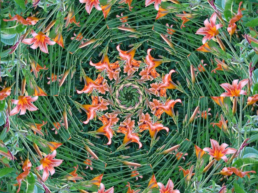 Flowers Digital Art - Lilly In Abstract by Rhonda Barrett