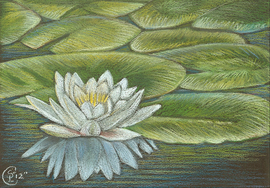 Lilys Pastel - Lily Pads by Stephanie L Carr