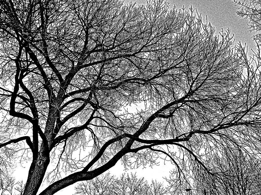 Trees Photograph - Limbeaux by Dan Stone