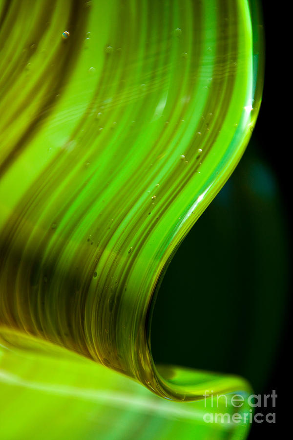 Lime Photograph - Lime Curl by Dana Kern