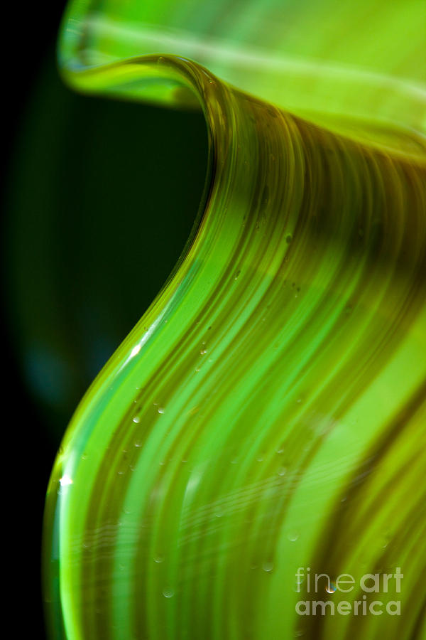 Lime Photograph - Lime Curl Ll by Dana Kern