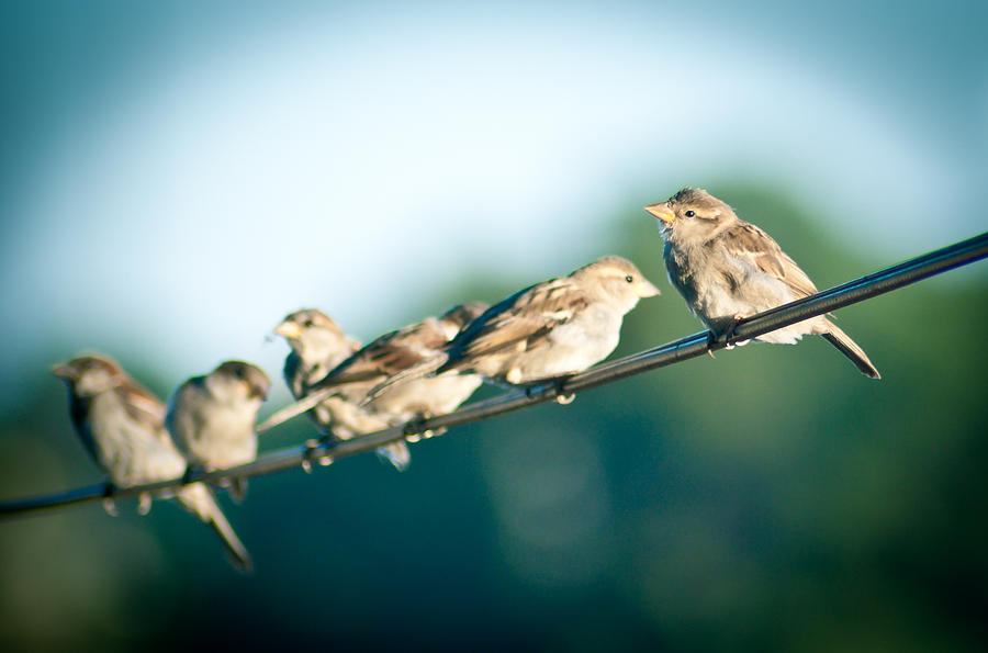 Birds Photograph - Lines Of Communication by Jason Heckman
