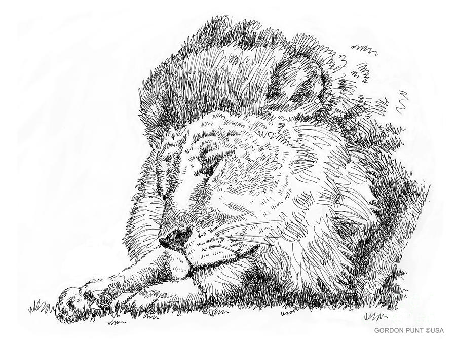 Cat drawing lion art black white by gordon punt