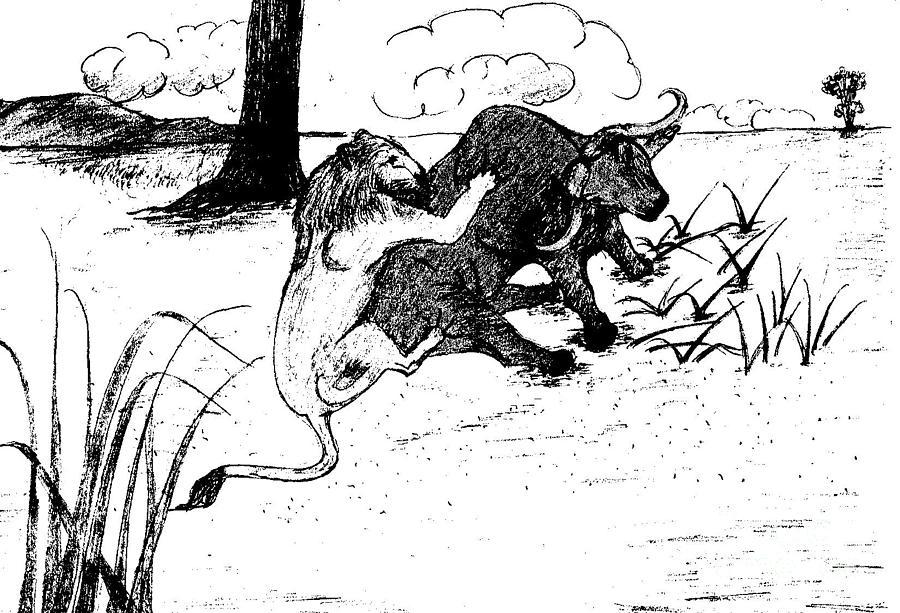 Lion Hunting Buffalo-1 by Mashukur Rahman