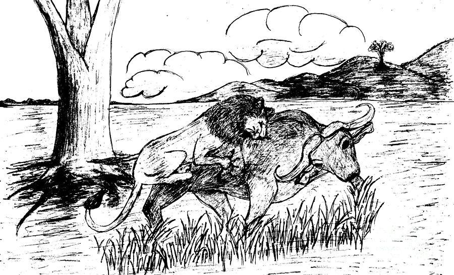 Lion Hunting Buffalo-2