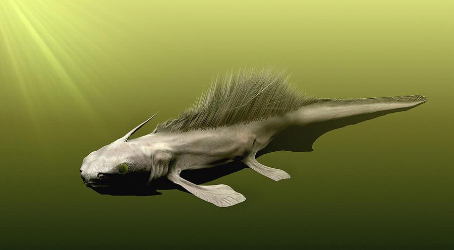 Prehistoric Shark Art   Fine Art America