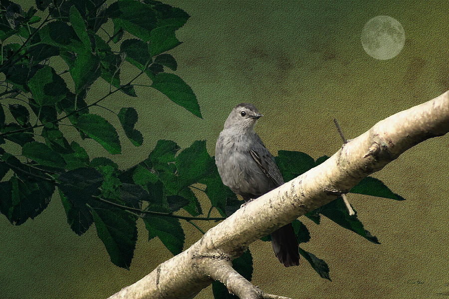 Nature Photograph - Little Bird by Tom York Images