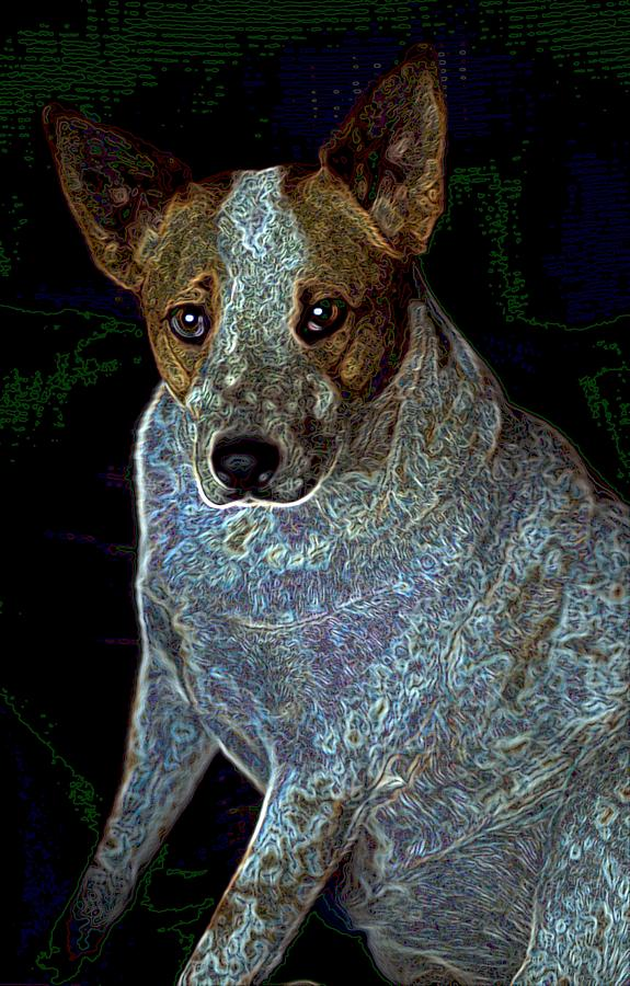 Red Heeler Photograph - Little Blue by One Rude Dawg Orcutt