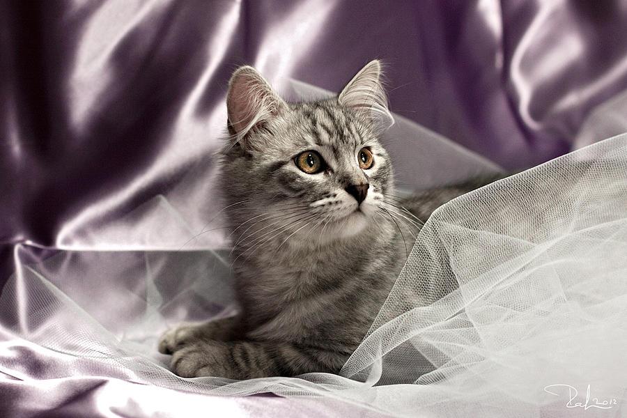 Cat Photograph - Little Cat On Lilac by Raffaella Lunelli
