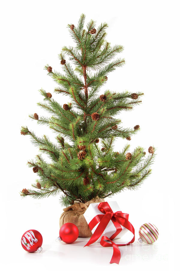 Little Christmas Tree With Red Ribboned Gifts On White Photograph