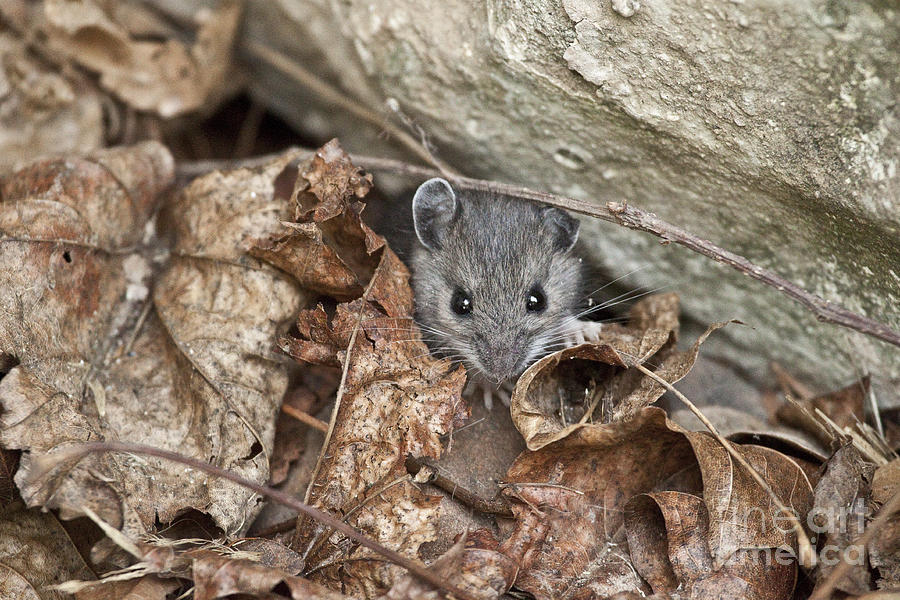 Creature Photograph - Little Creatures Need Love Too by Jeannette Hunt