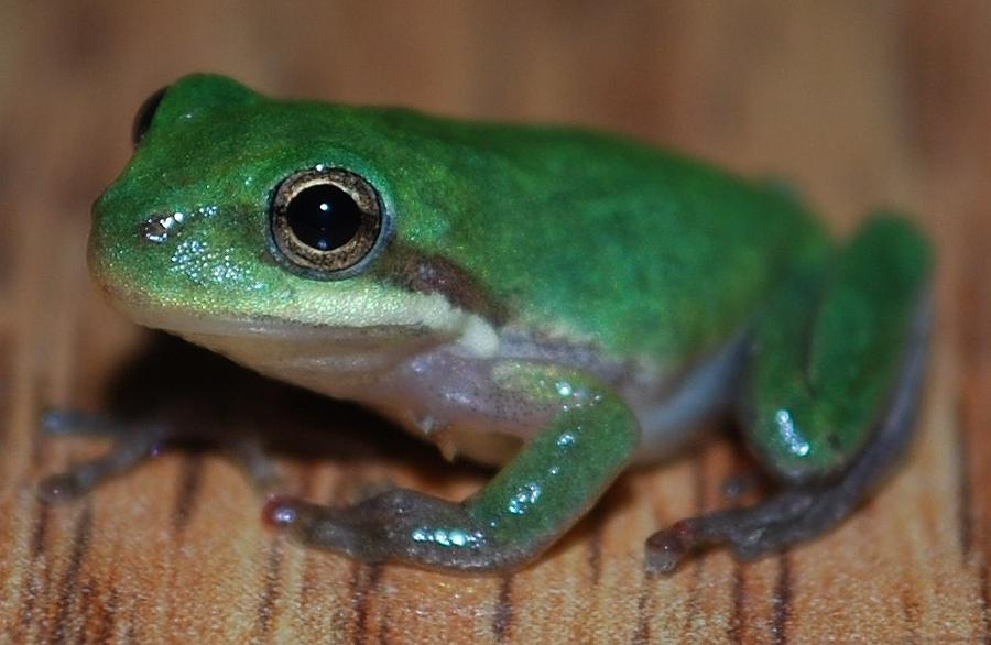 Frog Photograph - Little Frog by Carrie Munoz