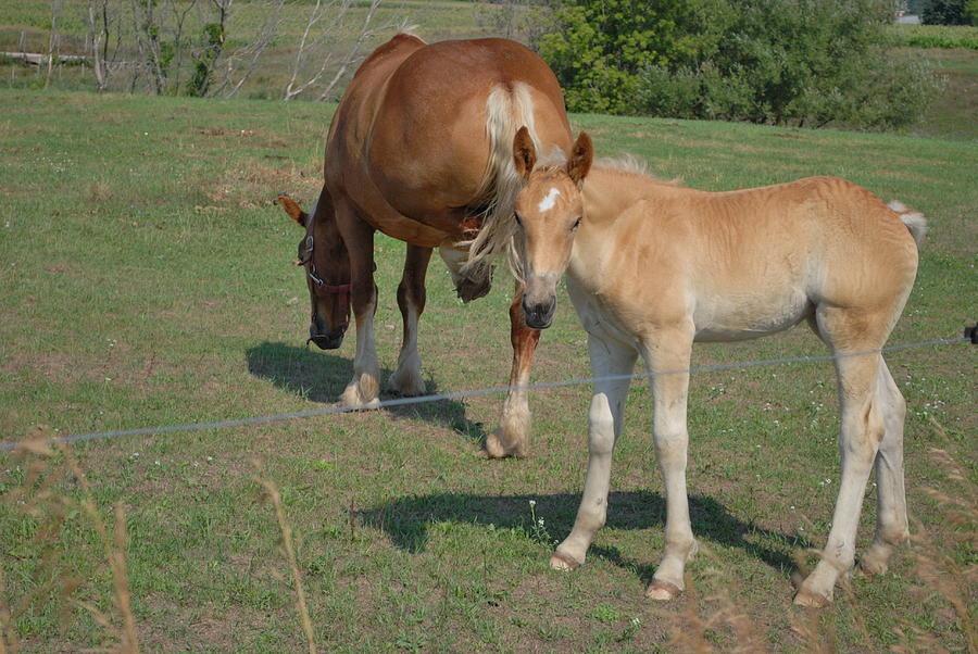 Horse Photograph - Little One by Grace Matson