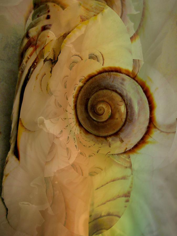 Seashells Photograph - Little Pet by Shirley Sirois