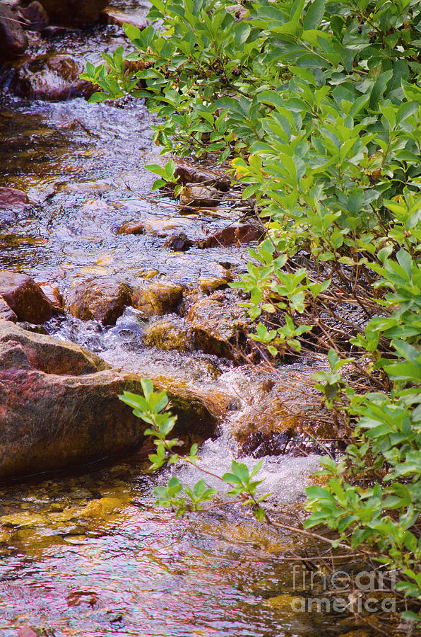 Water Photograph - Little Stream - Utah by Donna Greene