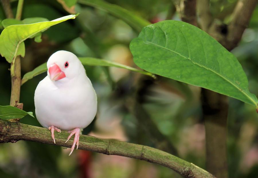 Little White Bird Photograph By Rosalie Scanlon
