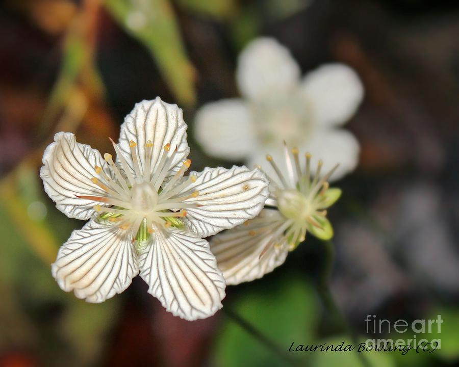 Flower Photograph - Little Wildflower by Laurinda Bowling