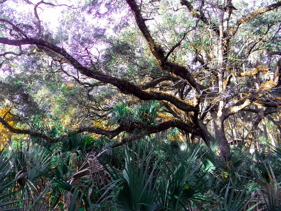Tree Photograph - Live Oak by Christy Usilton