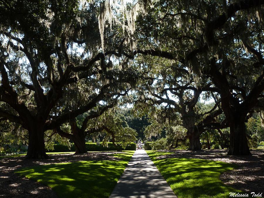 Nature Photograph - Live Oak Walk by Melessia  Todd