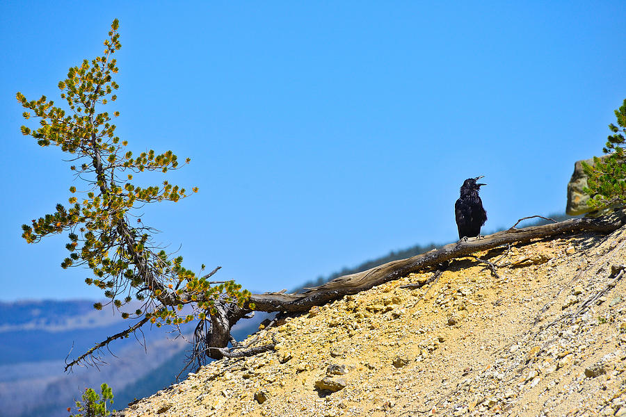 Yellowstone Photograph - Living On The Edge by Greg Norrell