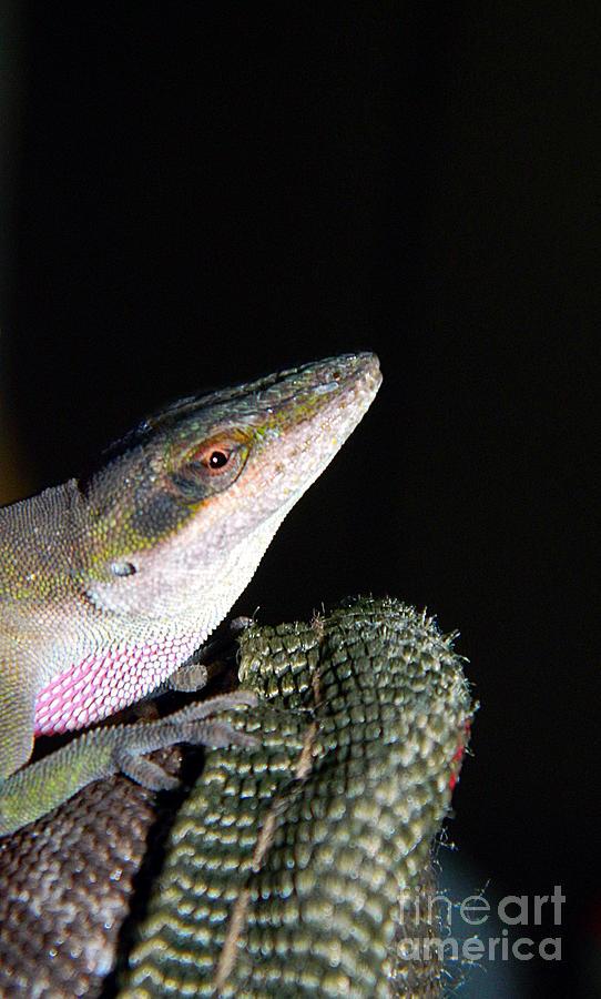 Animal Photograph - Lizard by Ester McGuire