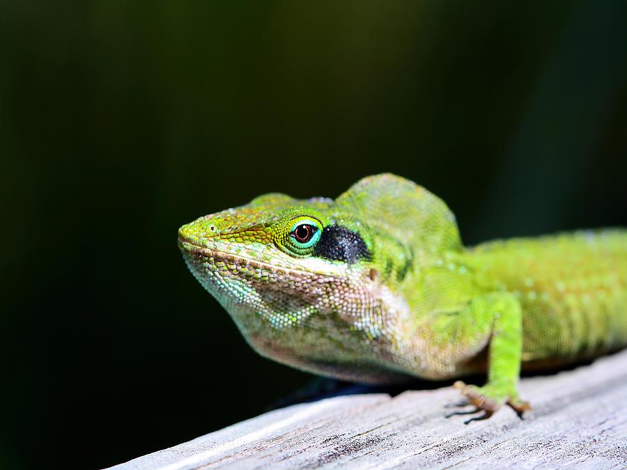 Friendly Photograph - Lizard by Jenny Ellen Photography