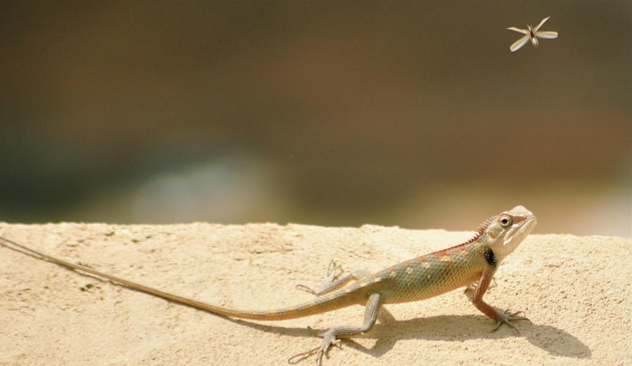 Horizontal Photograph - Lizards by Shahzeb Nasir