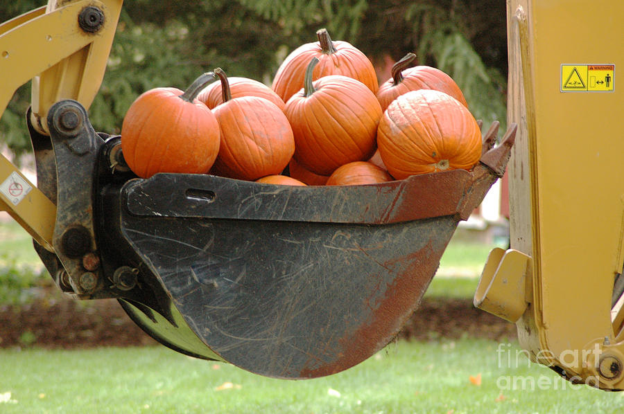 Pumpkins Photograph - Load Of Pumpkins by Ginger Harris