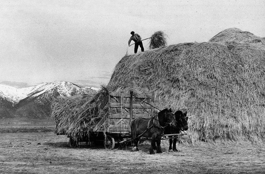 Adult Photograph - Loading Hay by Arthur Rothstein