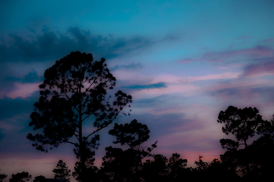 Sky Photograph - Loblelly Pine Silhouette by DigiArt Diaries by Vicky B Fuller