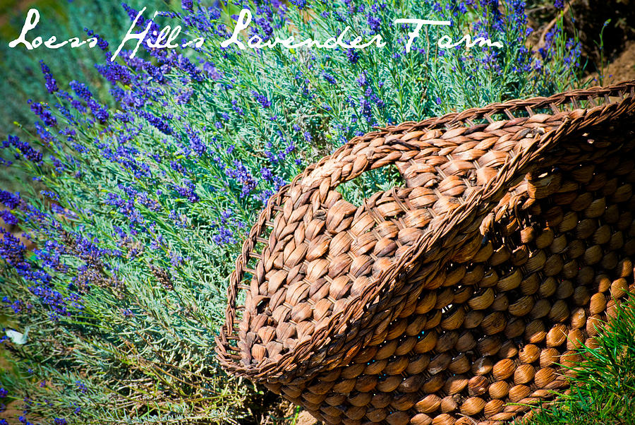 Landscape Photograph - Loess Hills Lavender by Elizabeth Gingerich